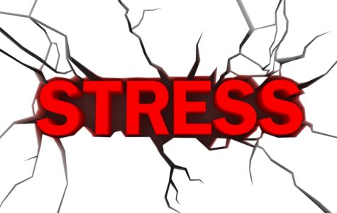 Dear Sharkie: What are some ways to deal with stress?