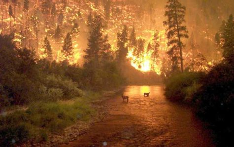 Montana's Worst Fire Season and No One Knew?