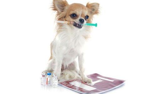 Dogs Get Diabetes Too