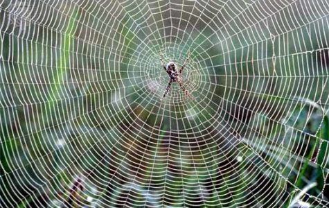 New Fabric: Spider Silk is a Hopeful Creation