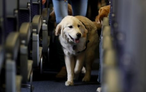 Should Service Animals Be Allowed On Airplanes?