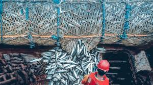 Overfishing: How It's Killing the Ecosystem