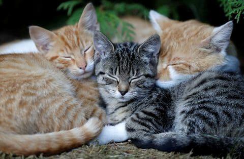 Third Cat Found With Black Plague