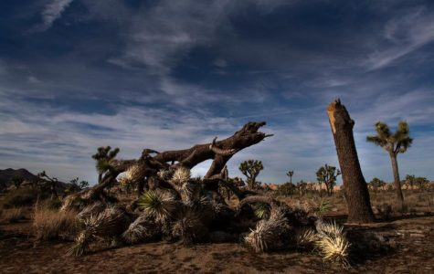 Government Shutdown impacts Joshua Tree