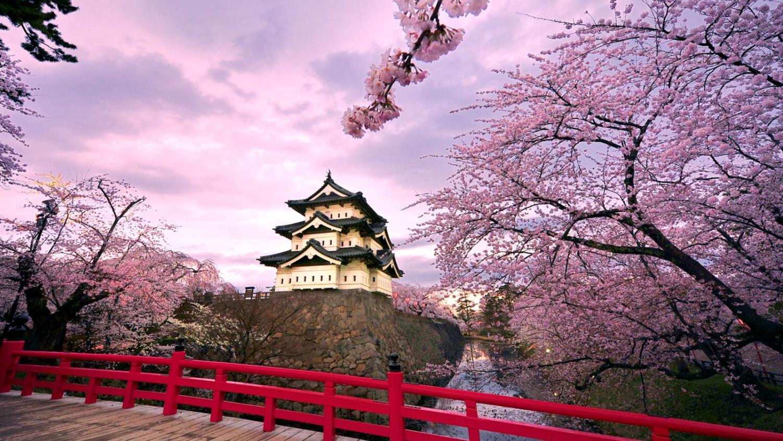 https://www.google.com/search?safe=active&rlz=1C1GCEB_enUS836US838&biw=1366&bih=625&tbm=isch&sa=1&ei=SLerXNWeMNXq-gSXqrzoDA&q=cherry+blossoms+japan&oq=cherry+blossoms+japan&gs_l=img.3...12453.15138..15409...0.0..0.0.0.......8....1..gws-wiz-img.H8yDMQ2OHGw#imgrc=B-VN0lQ7asR1yM: